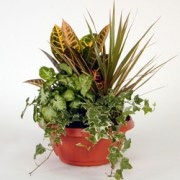interflora_product_00601